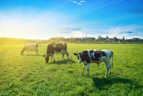3 motivos para se alimentar de carne de animais criados a pasto