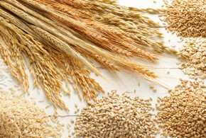 Antinutrientes: o lado obscuro dos grãos