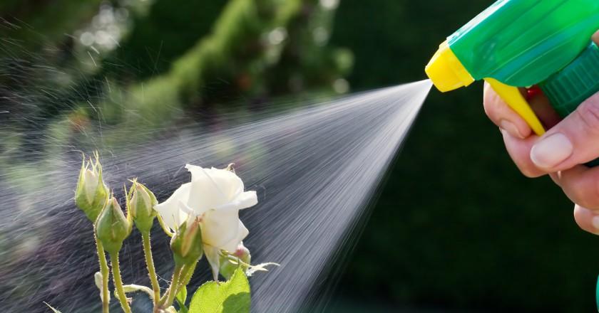 pessoa borrifando pesticida em sua planta