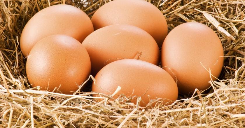 ovos de galinhas criadas soltas que são mais saudáveis