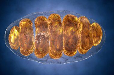 glicemia e mitocôndrias